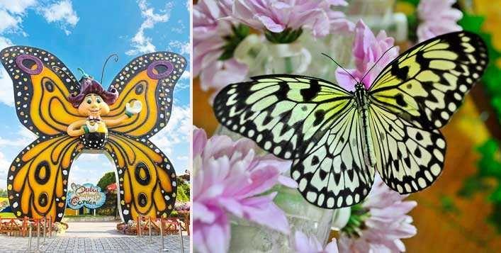 Dubai Butterfly Garden or Dubai Miracle Garden Tickets
