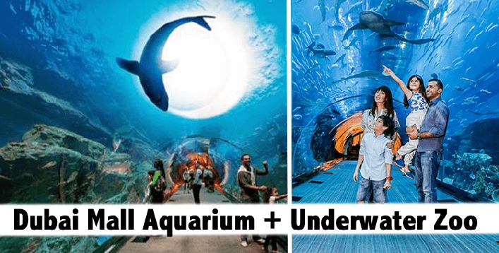 Dubai Mall Aquarium + Underwater Zoo Tickets for only AED69
